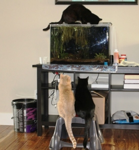 Cats and Fish